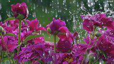 https://4.bp.blogspot.com/-hFZsYUNdtFc/WMU9kfjQ6AI/AAAAAAAARIM/Weje-PX5V-IYFkXU-64oGsyvNSE96NGsACLcB/s1600/rain%2B7.jpg