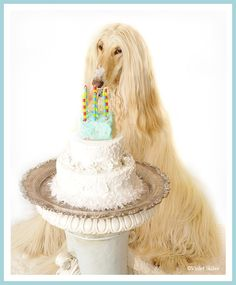 Afghan Hound Birthday Cake