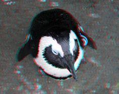 Natura Artis Magistra 3D
