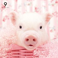 THE PIG PINK   OTHER   Artlist Collection CALENDAR 2015