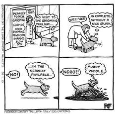 #WednesdayWags #GoldenRetriever #AdoptDontShop #Humour Secret Life Of Dogs, Secret Life Of Rabbits, Dog Quotes Funny, Funny Dogs, Funny Animals, Unique Dog Collars, Dog Comics, Cartoon Dog, Dog Cartoons