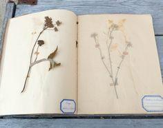 Vintage Antique  French herbarium by petitbrocante