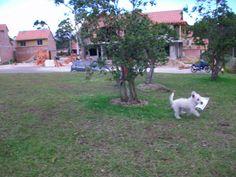 Agape Mimos en San Antonio de Pereira, Rionegro, Antioquia See Photo, San Antonio, Four Square, Pereira, Pets, Animales