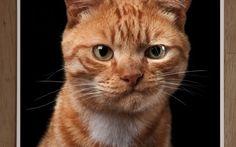 I RITRATTI DI CANI E GATTI DI ROBERT BAHOU DIVENTANO UN LIBRO Il fotografo, Robert Bahou, dedica gran parte del suo lavoro a ritratti di cani e gatti. La particolarità delle sue foto è che realmente sembrano restituire il carattere del soggetto. Bahou, ha recen #arte #fotografia #animali