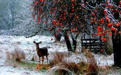 Preview wallpaper deer, winter, snow, walk, forest, trees