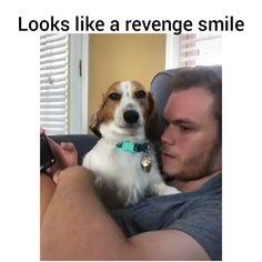 Funny Animal Jokes, Funny Dog Memes, Really Funny Memes, Funny Animal Videos, Funny Animal Pictures, Animal Memes, Funny Videos, Cute Baby Dogs, Cute Funny Dogs