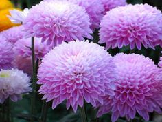Orchid Plants, Orchids, All Flowers, Happy Tuesday, Health Advice, Tulips, Dahlias, Rose, Pretty