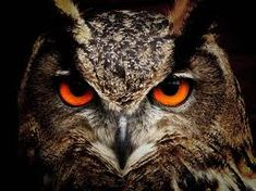 Image result for owl flying painting