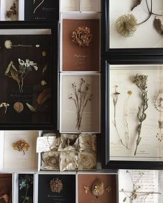 Beautiful dried flowers and plants specimens Wall Decor, Room Decor, Creation Deco, Idee Diy, Arte Floral, My New Room, Dried Flowers, Flower Art, Creative