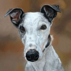 womens nike free tr7 greyhound dogs personality