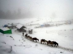 in #shimla many tourst come every year to enjoy there vacation. #shimlatourpackages give best offer to visit #shimla and make a best experience. Natural sight seen amazing weather with fresh air everybody feel happy in this climate.
