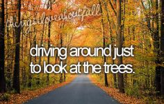 Yes, just driving around to see the colored leaves is a part of every fall season. Seasons Of The Year, Best Seasons, Autumn Day, Autumn Leaves, Bliss, Happy Fall Y'all, Mabon, Autumn Inspiration, Fall Season