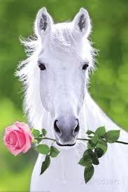 Image result for white horse