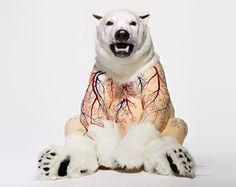 bear scuptures by deborah simon expose a species under threat