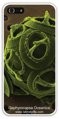 Amazing Exclusive SEM Collection - Gephyrocapsa Oceanica, iPhone 5/5s Case!