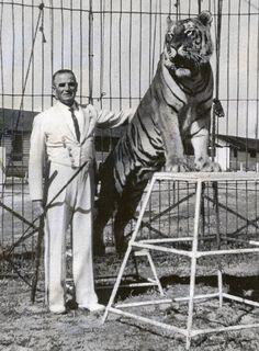 Classy Tiger Tamer