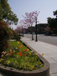 Claremont (in the spring)