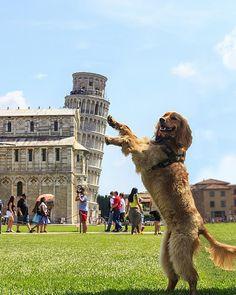 Dog saves the world #effeltower #dogsaver #frances #cutedog #european
