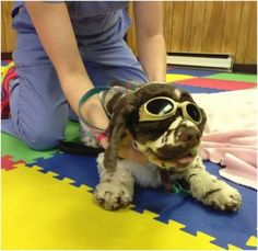 .Diary of a Dog Undergoing Laser Treatment: Entry One  .Posted on April 22, 2013 by Carol Bryant .  Fidose of Reality  .