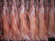 Etapes de la filière viande