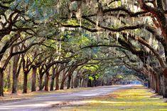 https://flic.kr/p/9a4d9L | Wormsloe Plantation | Live Oak Avenue Wormsloe State Historic Site Savannah, GA