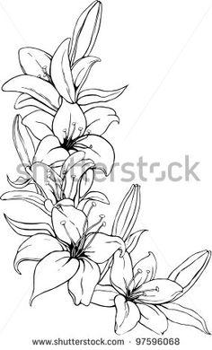 lily tattoo sketch vector illustration of lily in black Lily Tattoo Design, Flower Tattoo Designs, Tattoo Drawings, Body Art Tattoos, Tattoos Skull, Lirio Tattoo, Lilies Drawing, Lillies Tattoo, Lily Flower Tattoos
