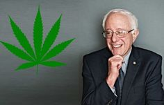 "Bernie Sanders wants to legalize marijuana. He recently introduced the ""Ending Federal Marijuana Prohibition Act,"" to legalize recreational marijuana. Is he ..."