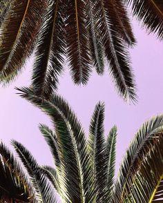 Cuando estoy estresada -como ahora - visualizo playas y palmeras. No es joda. De verdad quiero vivir ahí. Abajo de una !!!  . . . .rePLANOLY  @acolorstory . New filter pack designed by one of our favorites @ariellevey coming VERY soon!! Here's a little peek. (super excited over here)  #acolorstory . . . #bloggingtips #marketingdigital #quotes #instagrammer #blogger #creative #pnl #inspiracion #visionboard #blog #bloggerspain #creativepreneur #bloguera #bloggers #bloggerlife #blogging…