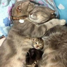 5 Adorable pets with their mothers.