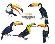 Toucan clip art Watercolor clip art Stock image Bird by YesFoxy