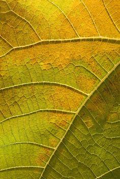 Leafy Veinular Inspiration