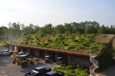 The Green Roof on May 1st, 2014. Note the drifts of chartreuse Black-seeded Simpson Lettuce, multi-colored Spurred Snapdragon, as well as the white flowering stalks of Yucca gloriosa (Spanish Dagger).