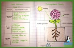 Check out these interactive notebook ideas for plants and photosynthesis!