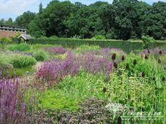 Paličky Rudbeckia occidentalis v popředí výrazně doplňují fialovou hru barev druhů Salvia a Nepeta. Scampston Hall. Piet Oudolf