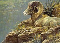 Robert Bateman North American Sheep Stamp Print Pumas, Sheep Paintings, Wildlife Paintings, Wildlife Art, Animal Paintings, Oil Paintings, Horse Artwork, Animal Drawings, Art Drawings