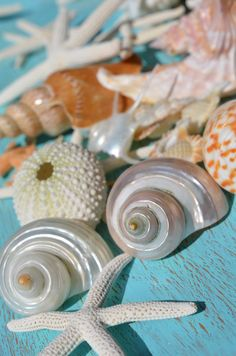 Shell Collection by Carol McGunagle Photography @ carol-mcgunagle.artistwebsites.com