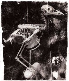 Bird Skeleton by angusisgone on Etsy