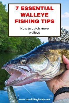 Best Walleye Lures, Crappie Rigs, Walleye Bait, Walleye Fishing Lures, Best Fishing Lures, Trout Fishing Tips, Fishing Rigs, Fishing Stuff, Carp Fishing