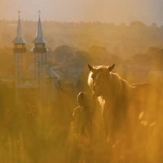 Mariutza and her horse in a field above Breb. Maramures, Romania.…