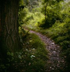 "istillshootfilm: "" Film Photo By: Owen Luther "" Ridley Creek State Park, Suburban Philadelphia, PA Hasselblad 500C/M, Fuji Pro 400H "" """