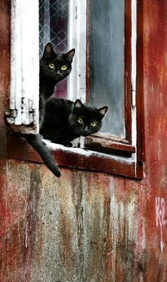 A barn wouldn't be complete without a couple of barn kitties! Best View! Kudos to the photographer!