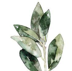 Hojas de laurel hierbas pintura impresión por TheColorfulCatStudio