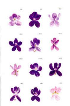 different types of violets