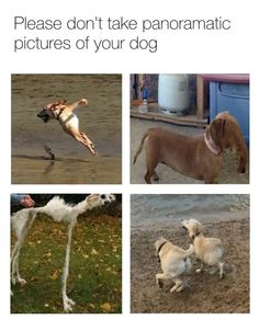 Lol These Dog Memes Are Insane – Dog Walker Meme Funny - dogmemes Meme Page, Funny Dog Memes, Memes Of The Day, Cute Funny Animals, Animal Memes, Funny Posts, Funny Pictures, Dog Pictures, Comedy Jokes