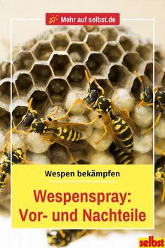 Wespenspray ist sehr effektiv, doch hat es nicht nur Vorteile. Wir verraten dir nicht nur, wie du Wespenspray richtig verwendest, sondern auch wann du es benutzen darfst und wann du die Wespen lieber nicht bekämpfen solltest! #wespen #wespenspray #wespenschaum #wespenbekämpfen #wespenvernichten #wespennest #insekten #selbst Wind Direction, Wasp Nest, Benefits Of, Insects, Work Shop Garage