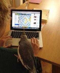 birds with friends, syosset, ny   november 2011