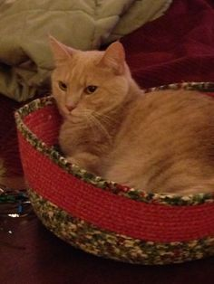 Tango in her Christmas clothesline cat bed