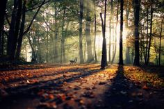 Park Photography by Erik Witsoe
