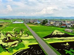 """Rice Paddy Art 