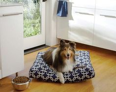 Pets On Pinterest Dog Beds Design Your Own And Modern Dog Houses